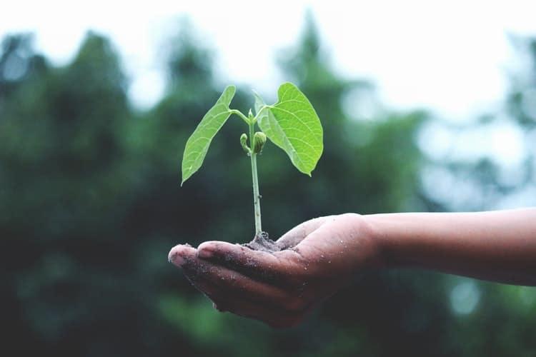 vay đất trồng cây